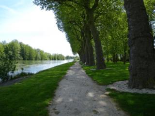 Platanes de Bray-sur-Seine